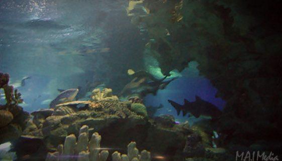 Aquaria KLCC dan Taman Burung Kuala Lumpur