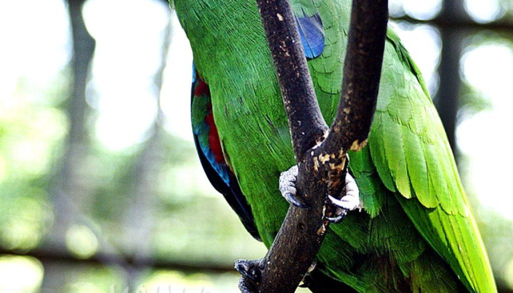 Taman Burung, Kuala Lumpur – #vol2 – Terima kasih @Zamfoto & @Heymijie