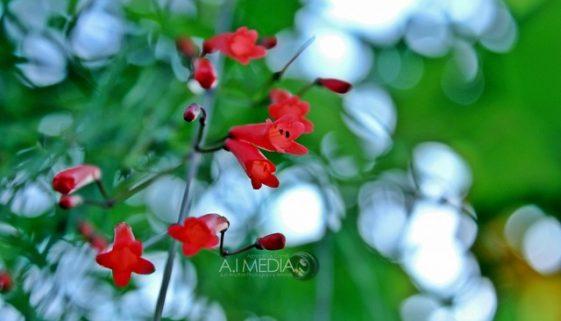 BigPigture : Edisi Tali Merah Beraksi Bersama KitLens