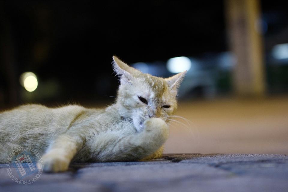 Kucing ni menjadi peneman setia sepanjang aku outing dengan Brader Azman Ismail