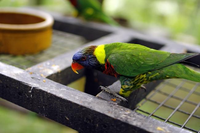 Kembali ke Parrot Cage. Memang tak puas sebab burung kat sini jinak-jinak belaka.