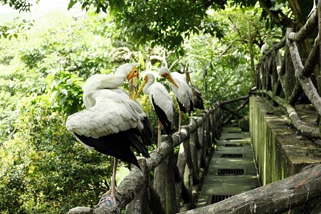 Tembok ni dah kira port aktiviti berjemaah burung-burung kat sini.