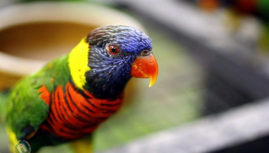 Burung ni sangat sporting.. siap datang dekat dan give the best possing. I lappp yuuu...