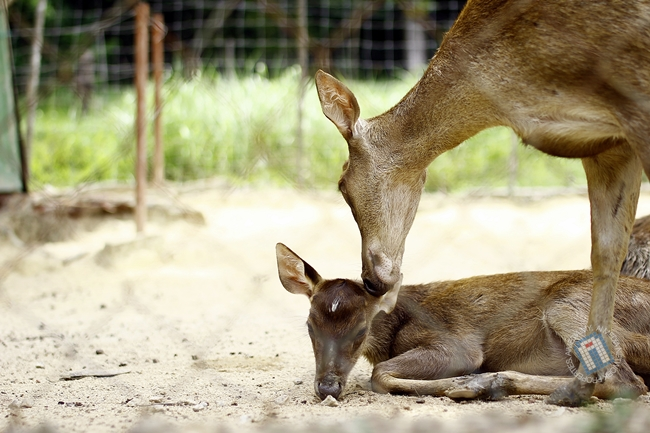 Gambar anak rusa nani.. eh.. ni masa kat Mini Zoo Kuantan ni