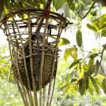 Misi Menjejak Durian Ko`diang